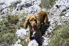 Teo, el montañero