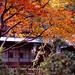 盛秋の庭先
