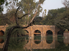 Lodi Gardens bridge