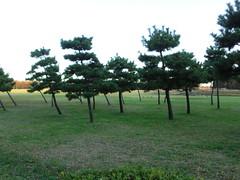 水元公園20111205-101