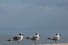 Day 338