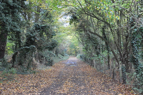 A leafy English path