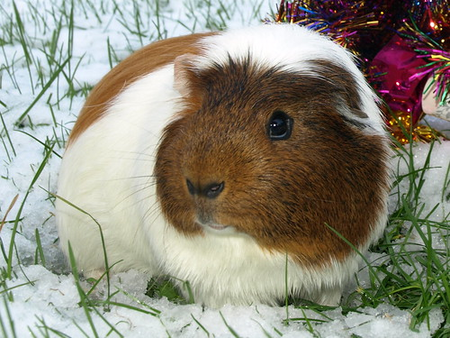 Malcolm Snow Bunny, 10 Dec 11 by Castaway in Scotland