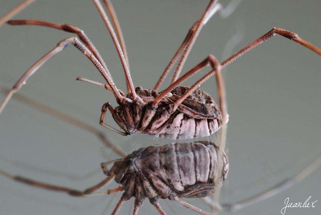 Araña con patas largas - Macrofotografía - Comunidad ...