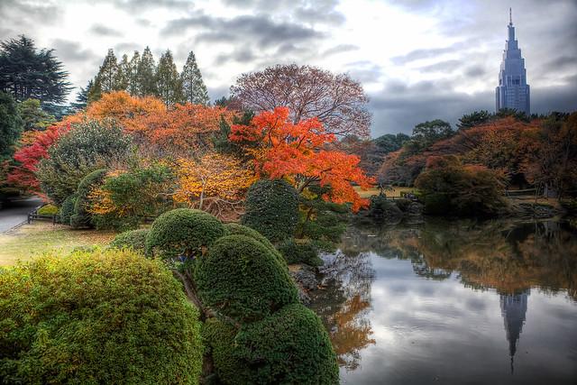 Fall Colors at Shinjuku Gyoen, Tokyo