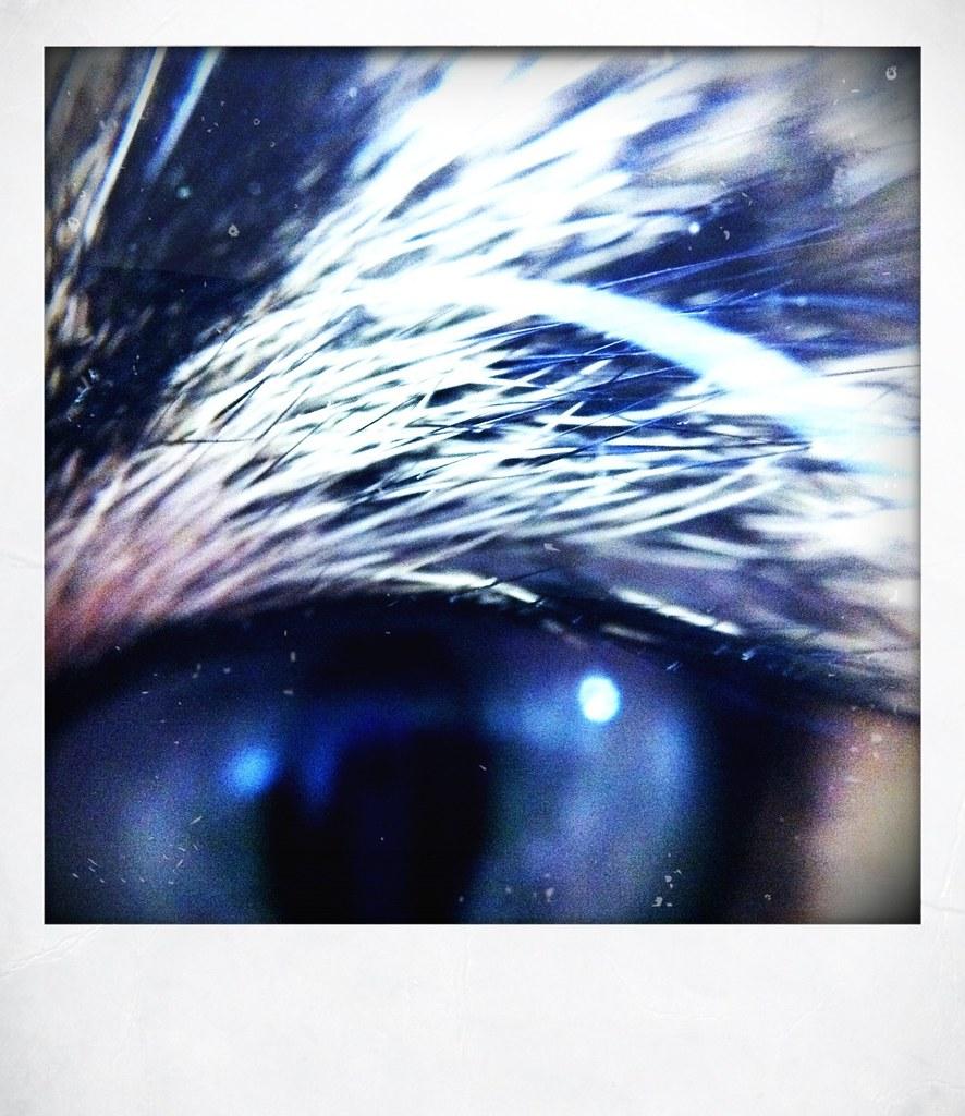 Onion's eye 2