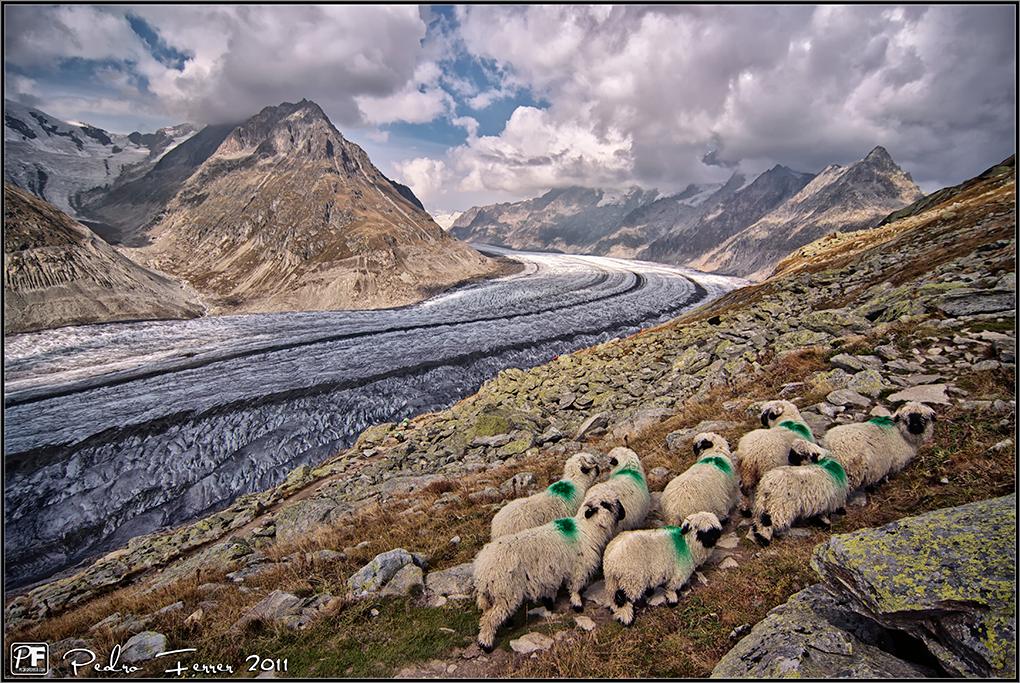 Suiza - Las Montañas - mis ovejas son las verdes