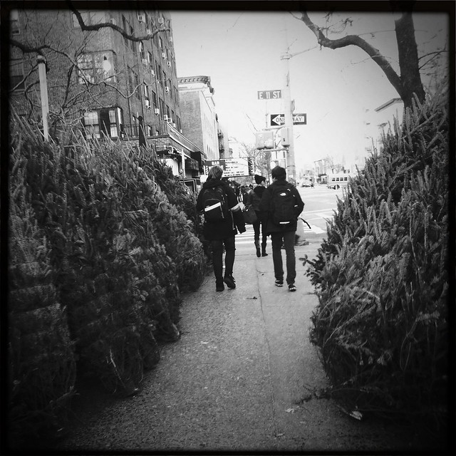 NYC Christmas tree lot