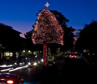 Carmel - Ocean Ave Tungston Tree