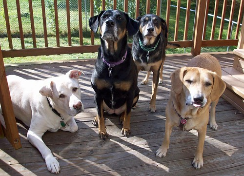Outtakes_4Dogs_101611f