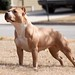 "UKC UWP GR. CH. PR' BUENOS AIRES OUT 4 JUSTICE  ""HALO' CGC"
