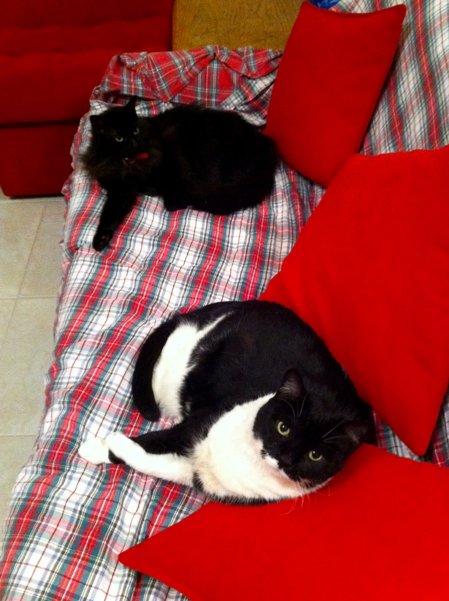 Billy Lee and Pixel on the couch, November 2011
