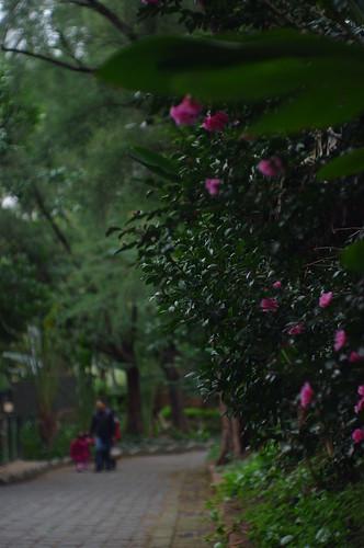 鳳凰50mm手動鏡  新竹動物園