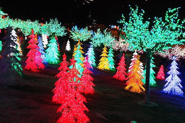 Pokok-pokok cahaya berwarna warni