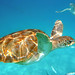 Sea turtle by vieirr2
