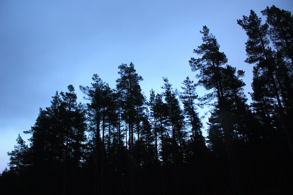 Last light through the pines