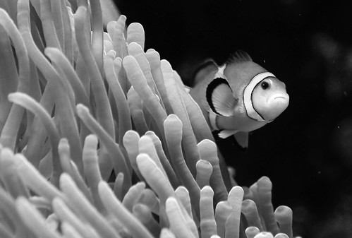 Nemo limited edition b&w