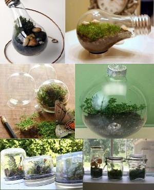 terrarium reciclados
