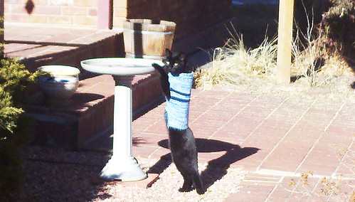 thirsty cat 2