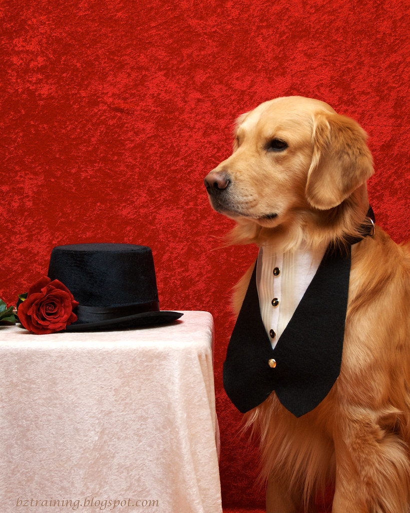 Sharp Dressed Dog