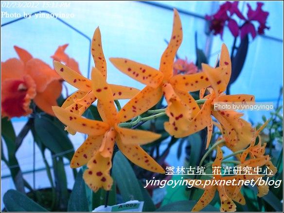 雲林古坑_花卉研究中心20120123_R0050679