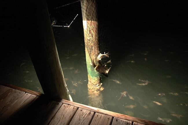 dock14