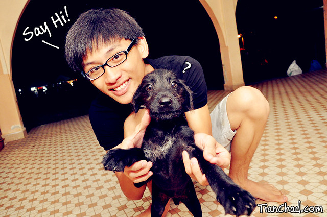 Black Puppy @ CNY Waving Say Hi | TianChad.com