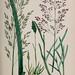 British grasses