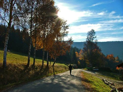 Herbstfarben_Gegenlicht