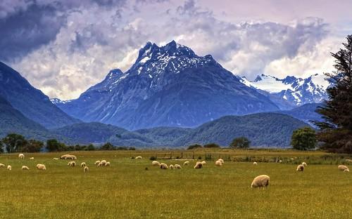 Pastoral NZ by Daniel Schwabe