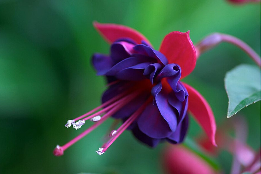 Very Pretty Flower I Have Never Seen Such Beautiful Flower Rick