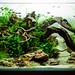 90x45x45cm Planted Aquascape - week 3 by Stu Worrall Photography