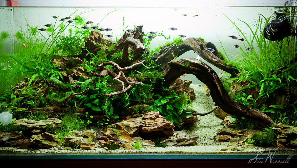 Delicieux 90x45x45cm Planted Aquascape   Week 3 By Stu Worrall, On Flickr