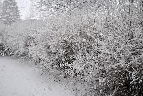 snow 2-4-12 038