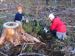 Hopsani metsaistutus 2007