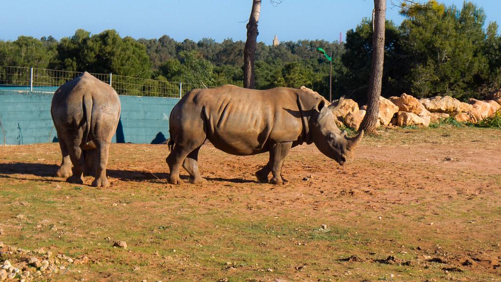 Jardin zoologique national jzn rabat 27 ha 50 ha for Le jardin zoologique de berlin