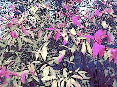 Pink and Yellow Autumn Leaves (Digital Woodcut) by randubnick