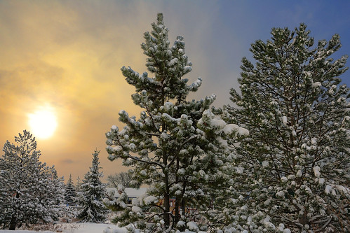 snow minnesota sunrise pines bellaire