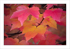 Fall colors - Autunno