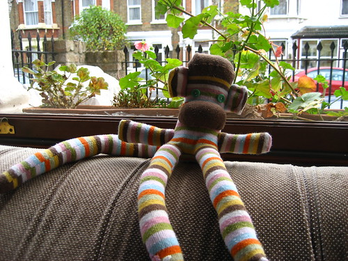 Advent, the sock monkey