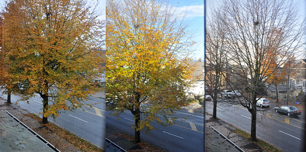 3-stages-of-tree-625
