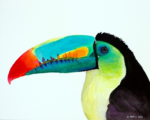 Sulphur-breasted Toucan