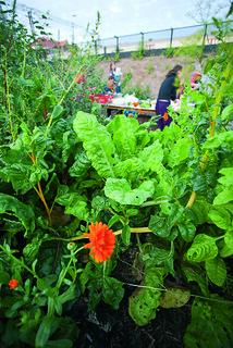 Harvesting party @Pasila-guerilla-garden