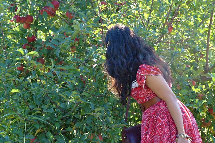 meapplepicking
