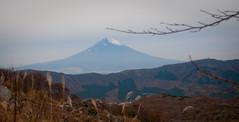 The Fuji