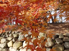 土, 2011-11-26 10:49 - ブルックリン植物園, (紅葉の季節)