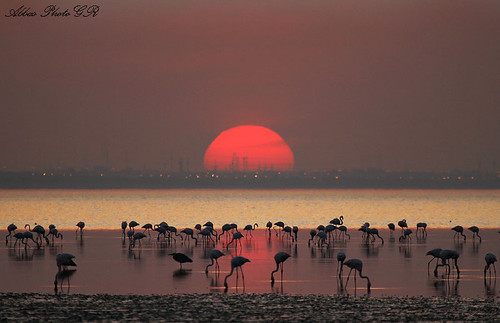 Flamingos sunset