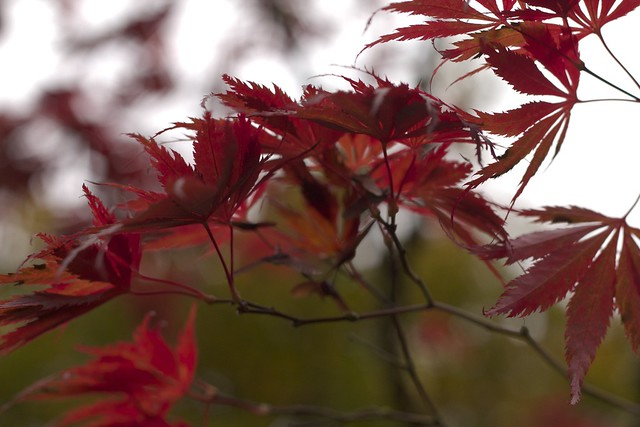 Red Leaves From the Side