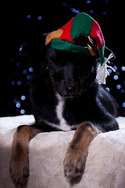 holiday dogs-4