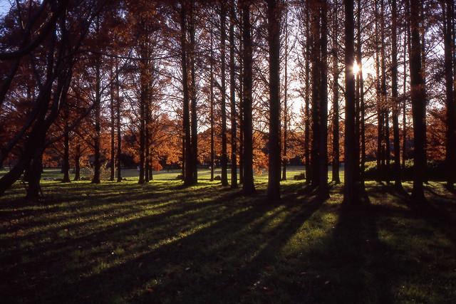 杉林の木漏れ日